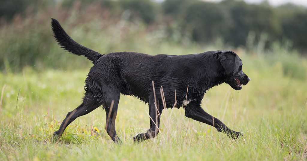 foto-blog-kijken-naar-je-hond2