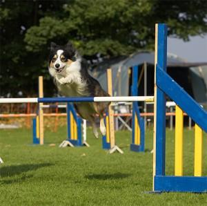 agility-sprong
